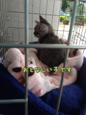 fc2blog_20140921194603e26.jpg