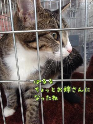 fc2blog_20140921195123de5.jpg