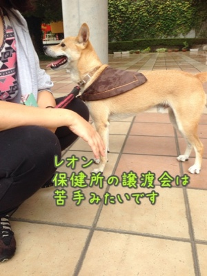 fc2blog_20140921195404d11.jpg