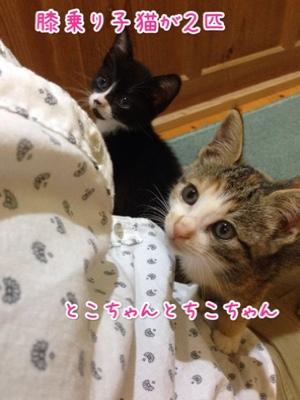 fc2blog_201409252005343ce.jpg