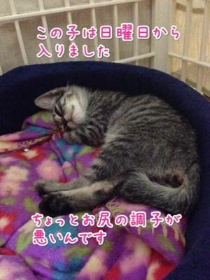 fc2blog_20140925200554a8c.jpg
