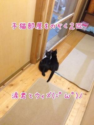 fc2blog_20140925200800fdb.jpg