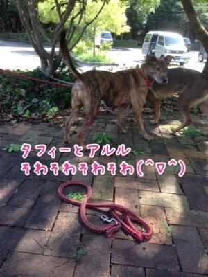fc2blog_201409292137495c7.jpg