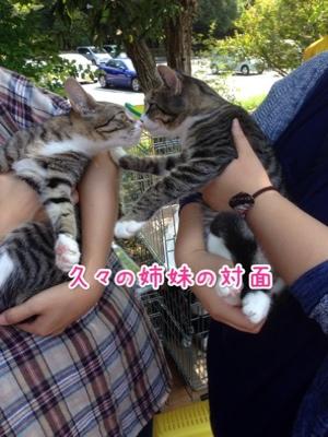 fc2blog_20140929214114f53.jpg
