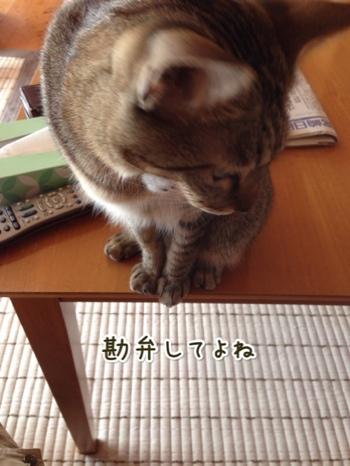 fc2blog_20141018113024199.jpg