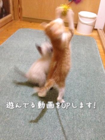 fc2blog_201410181258502e0.jpg