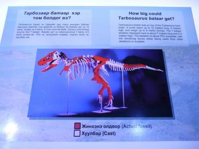 Tarbosaurus8
