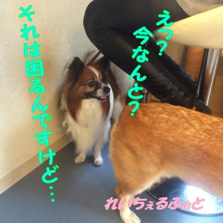 DPP_5685.jpg