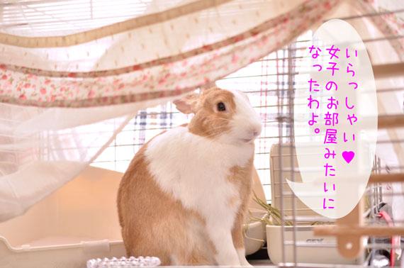 g_DSC2224.jpg