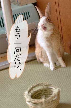 jjj_DSC8746.jpg