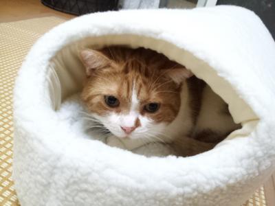 ふわふわベッド