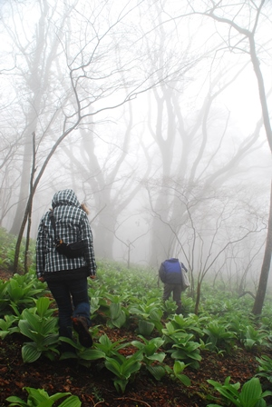 森のたね 猟師の里山暮らし 霧の原生林