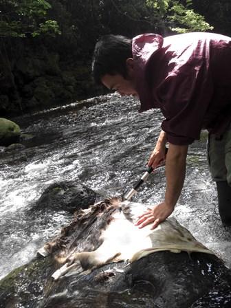 森のたね 猟師体験 なめし行程