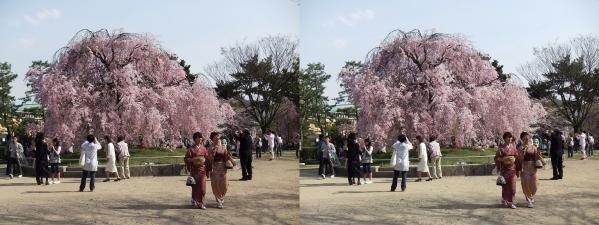 岡崎公園②(平行法)