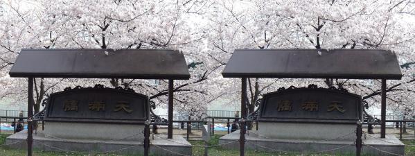 毛馬桜之宮公園⑥(平行法)