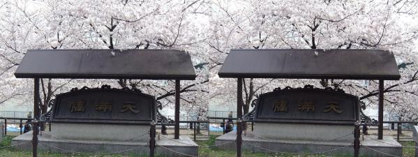 毛馬桜之宮公園⑥(交差法)