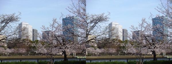 毛馬桜之宮公園⑤(平行法)
