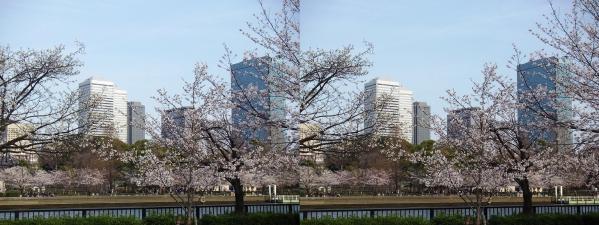 毛馬桜之宮公園⑤(交差法)