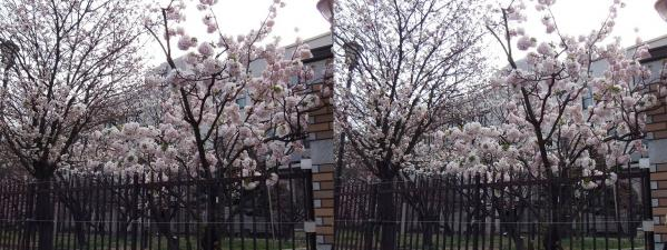 毛馬桜之宮公園④(平行法)