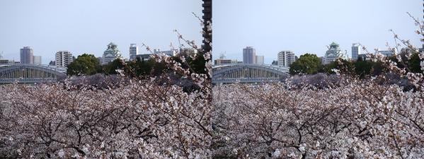 毛馬桜之宮公園③(平行法)