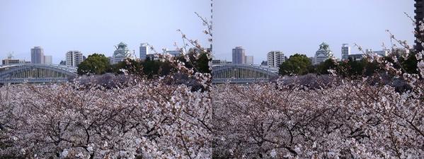 毛馬桜之宮公園③(交差法)