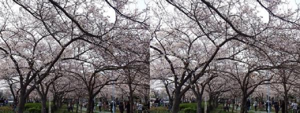 毛馬桜之宮公園②(平行法)