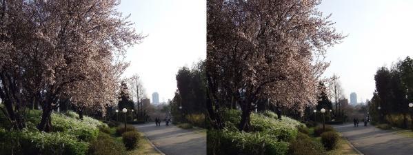 鶴見緑地公園③(交差法)