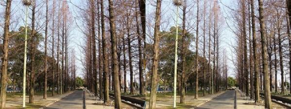 鶴見緑地公園⑤(平行法)