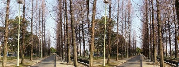 鶴見緑地公園⑤(交差法)