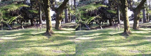 奈良公園 浅茅が原(平行法)