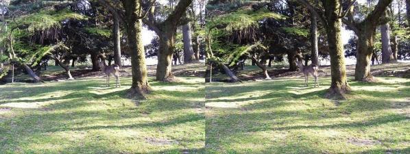 奈良公園 浅茅が原(交差法)