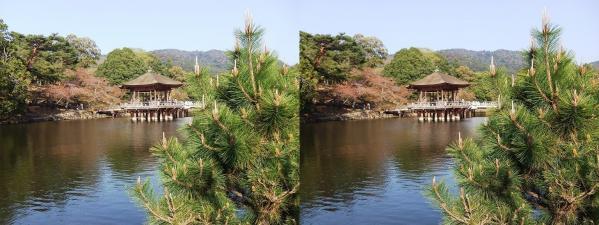 奈良公園 浮見堂・鷺池③(交差法)