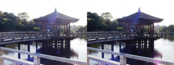 奈良公園 浮見堂・鷺池①(交差法)