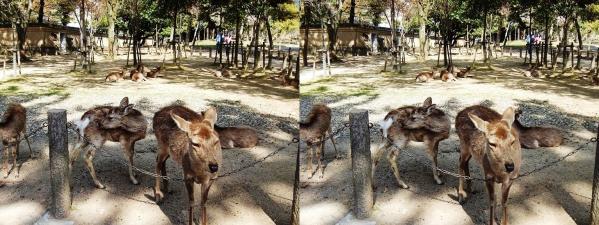 東大寺の鹿(平行法)