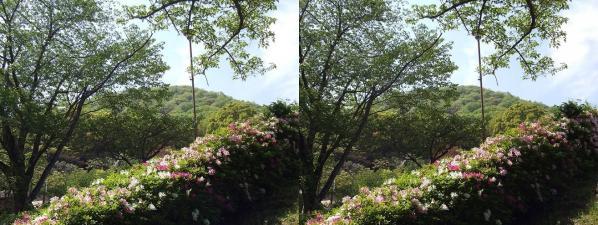 甲山ハイキングコース⑩(交差法)