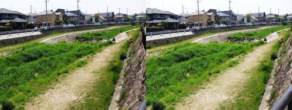 仁川(平行法)