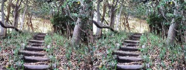 ハーブ園 ハイキングコース①(平行法)