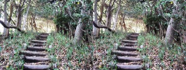 ハーブ園 ハイキングコース①(交差法)
