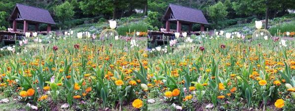 四季の庭①(平行法)