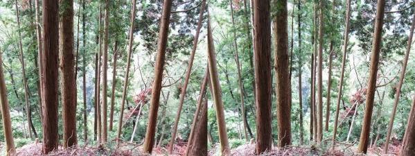 比叡山林道②(平行法)