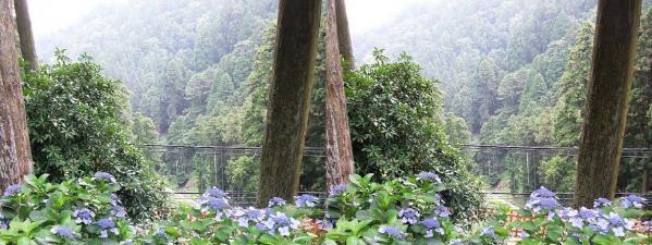 比叡山林道①(交差法)