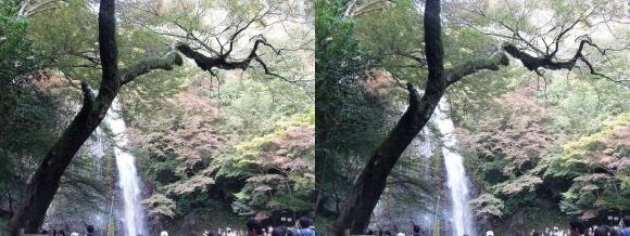 箕面大滝⑤(平行法)