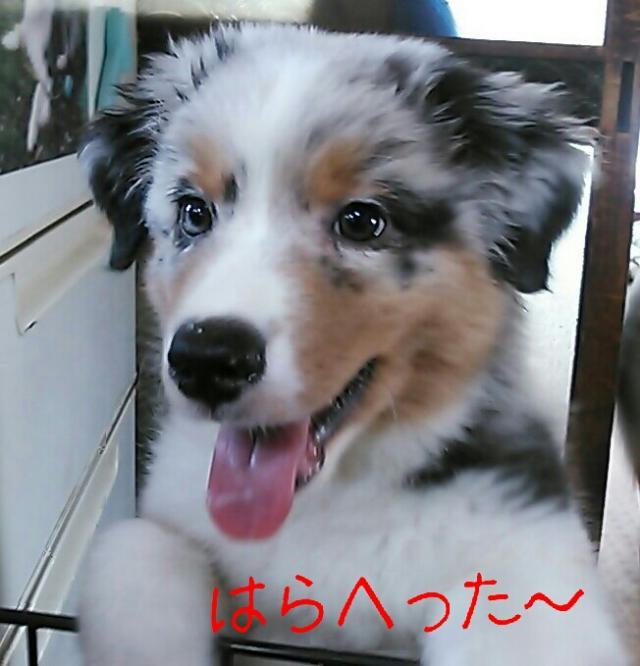 rakugaki_20130807_0017_convert_20130808213129.jpg