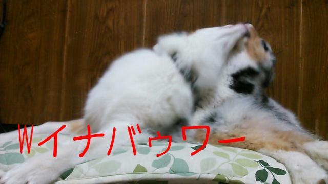 rakugaki_20130908_0035_convert_20130908002635.jpg
