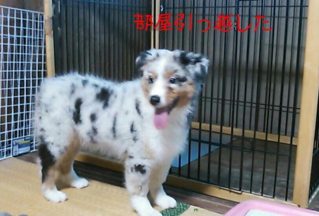 rakugaki_20130916_0037_convert_20130917212619.jpg