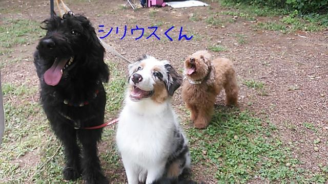 rakugaki_20130922_0039_convert_20131003003604.jpg