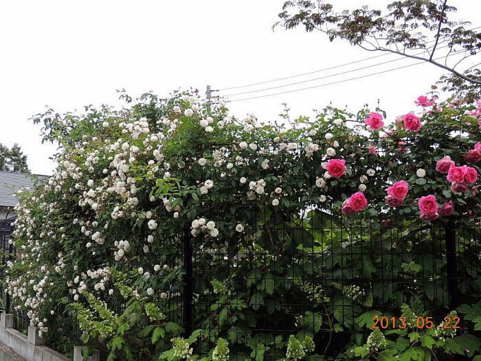 DSCN1064_20130524052643.jpg
