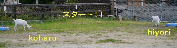kohruhiyori130806-0