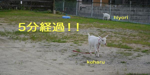 kohruhiyori130806-2