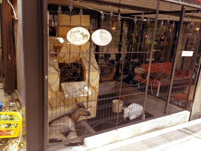 桜丘カフェ ヤギのいるカフェ!